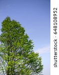 Small photo of crone of tree again blue sky abstract