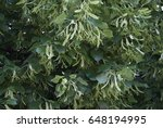 texture of pine branches | Shutterstock . vector #648194995
