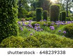 english garden with blooming... | Shutterstock . vector #648239338
