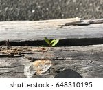 plant sprout from the timber... | Shutterstock . vector #648310195