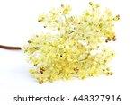 flower of fern leaf dropwort ... | Shutterstock . vector #648327916