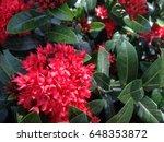 flower | Shutterstock . vector #648353872