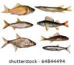Seven Freshwater Fishes...