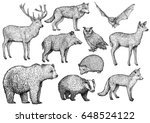 forest animal illustration ... | Shutterstock .eps vector #648524122