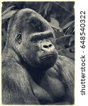 male gorilla with smart eyes in ... | Shutterstock . vector #648540322