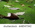 Dry Leaves At Green Mos...