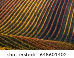 Rows Of Vineyard Grape Vines...