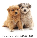 Stock photo red puppy and kitten and bunny on a white background 648641782