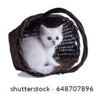 Stock photo british shorthair kitten peeks out of the basket color silver shaded isolated on white background 648707896