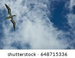 Gannet In Front Of The Sky