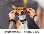 Stock photo man with tattooed arms and hipster fashion accessories plays with his dog and makes it smile with 648829222