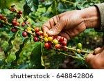 hand picking coffee bean  | Shutterstock . vector #648842806