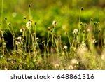 blur grass flower field
