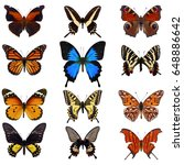 Stock photo collection of colorful butterfly isolated on white background 648886642