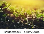 close up of soybean plant in... | Shutterstock . vector #648970006