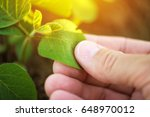 close up of male farmer hand... | Shutterstock . vector #648970012