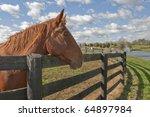 beautiful bay horse behind a... | Shutterstock . vector #64897984