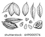 cocoa beans vector isolated on... | Shutterstock .eps vector #649000576