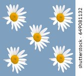 white daisy flowers isolated on ... | Shutterstock . vector #649081132
