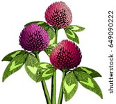 hand drawn clover flower set in ...