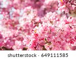 beautiful pink flowers... | Shutterstock . vector #649111585