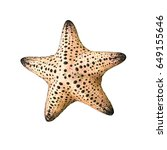 colorful alive starfish  ... | Shutterstock . vector #649155646