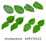 kaffir lime leaves isolated on... | Shutterstock . vector #649170112