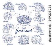 doodle set of fresh salad  ... | Shutterstock .eps vector #649235236