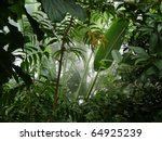misty jungle   rainforest scene | Shutterstock . vector #64925239