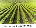 agricultural soy plantation on ... | Shutterstock . vector #649293736