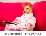 chihuahua dog watching tv or a... | Shutterstock . vector #649297486