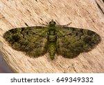 green pug  pasiphila... | Shutterstock . vector #649349332