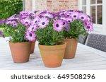 garden still life  purple... | Shutterstock . vector #649508296