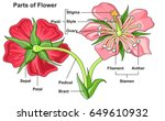 flower parts diagram front and... | Shutterstock .eps vector #649610932