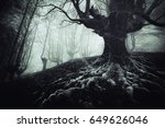 Creepy Tree With Twisted Roots...