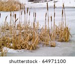 Frozen Marsh Area On An...