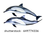 Jumping Dolphins Isolated On...