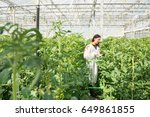 scientist researching on tomato ... | Shutterstock . vector #649861855