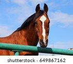 curious horse along a fence... | Shutterstock . vector #649867162
