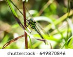 A Dragonfly Sits On The Stem O...