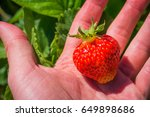 A Single Red Strawberry In Pal...