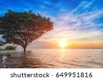 sunset with tree  reflection in ... | Shutterstock . vector #649951816