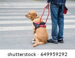 guide dog is helping a blind... | Shutterstock . vector #649959292