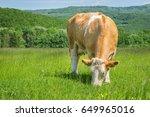 cow feeding on a green summer... | Shutterstock . vector #649965016