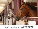 Black White And Brown Horses I...