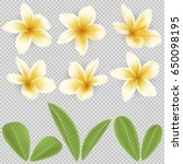white and yellow plumeria... | Shutterstock .eps vector #650098195