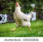 funny running chicken in bio... | Shutterstock . vector #650102836