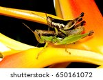 Mating Insect