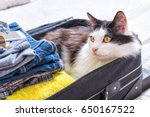 cat sitting in the suitcase or... | Shutterstock . vector #650167522
