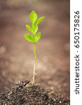 young plant on soil   Shutterstock . vector #650175826